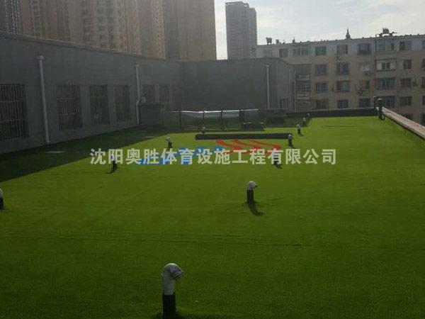 三十五中学楼顶景观草